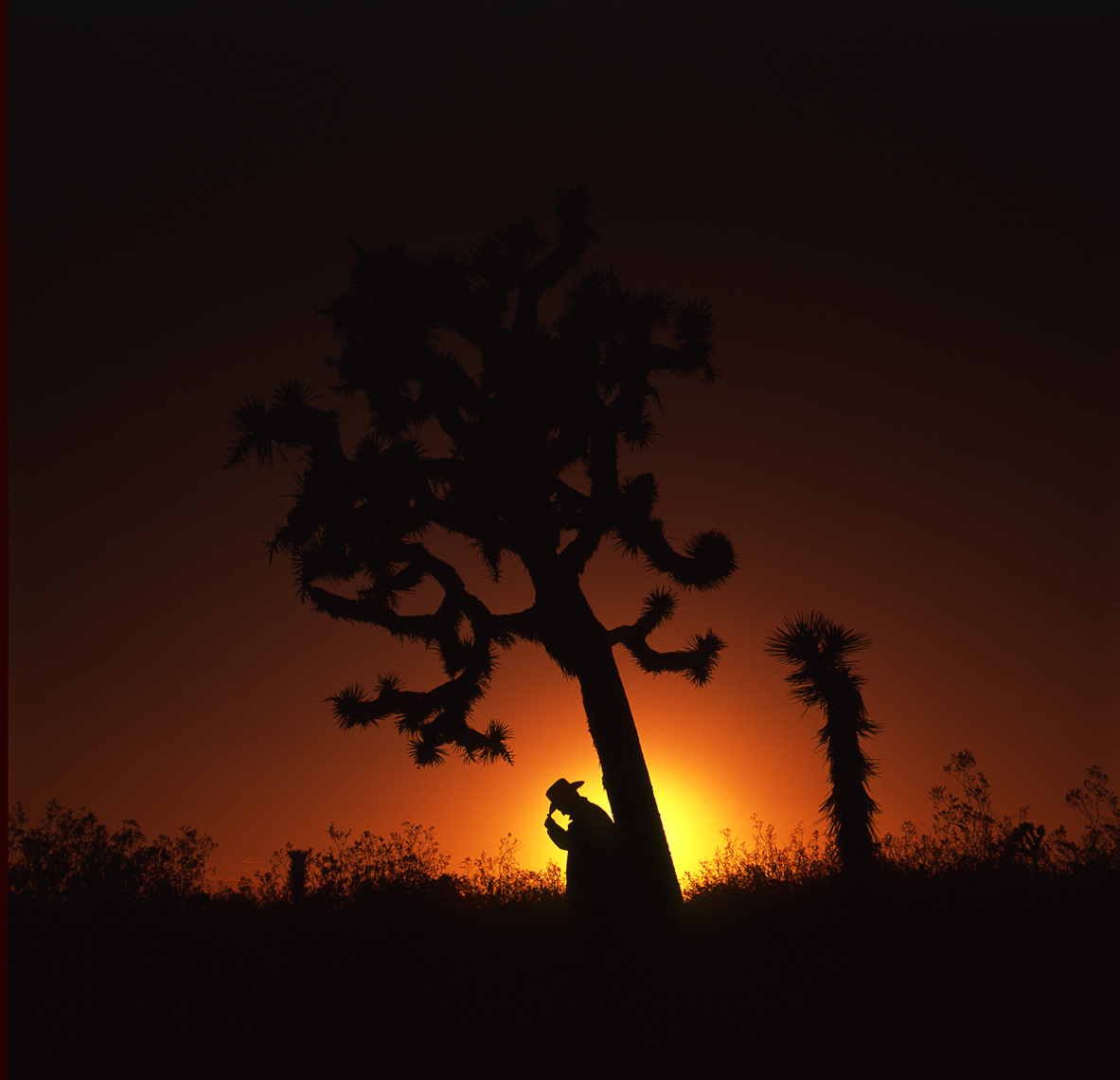 Scharetg_Joshua-Tree-Self-Portrait.jpg