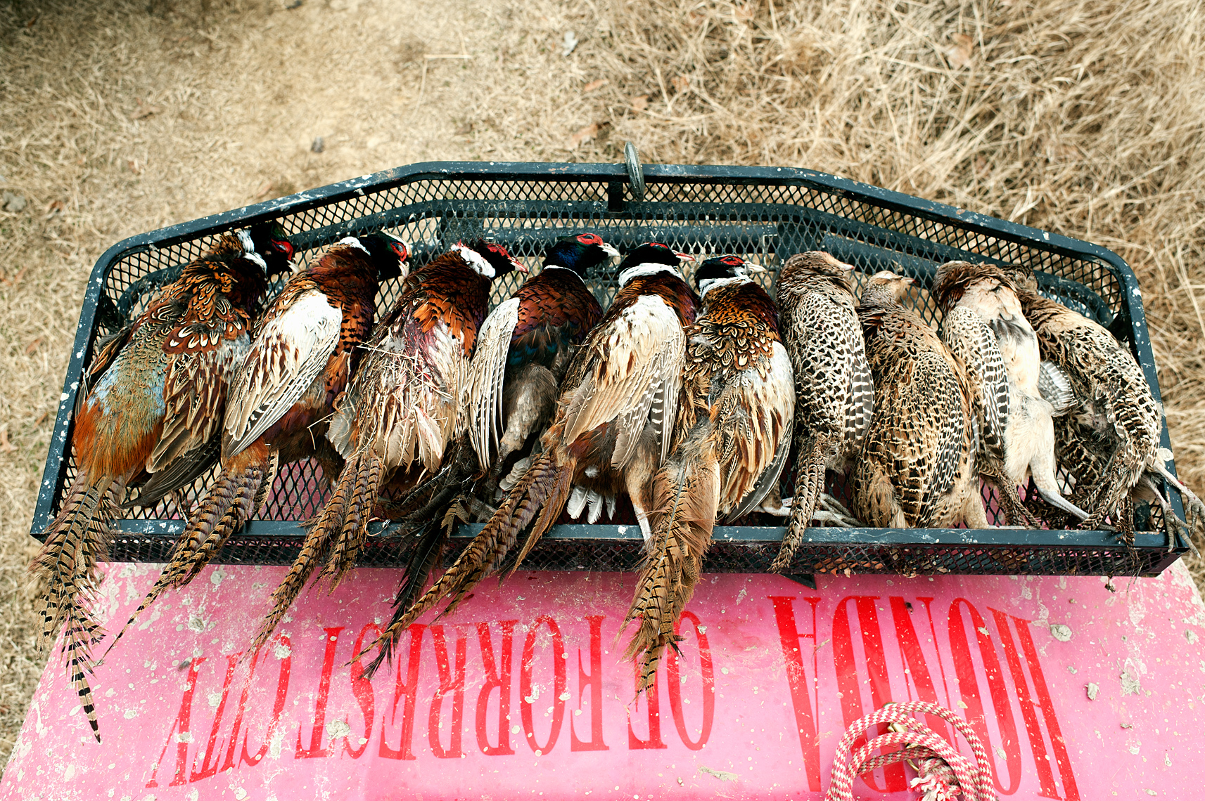 ©Robb Scharetg - after an afternoon of hunting upland birds.  DC photographer , SF photograper